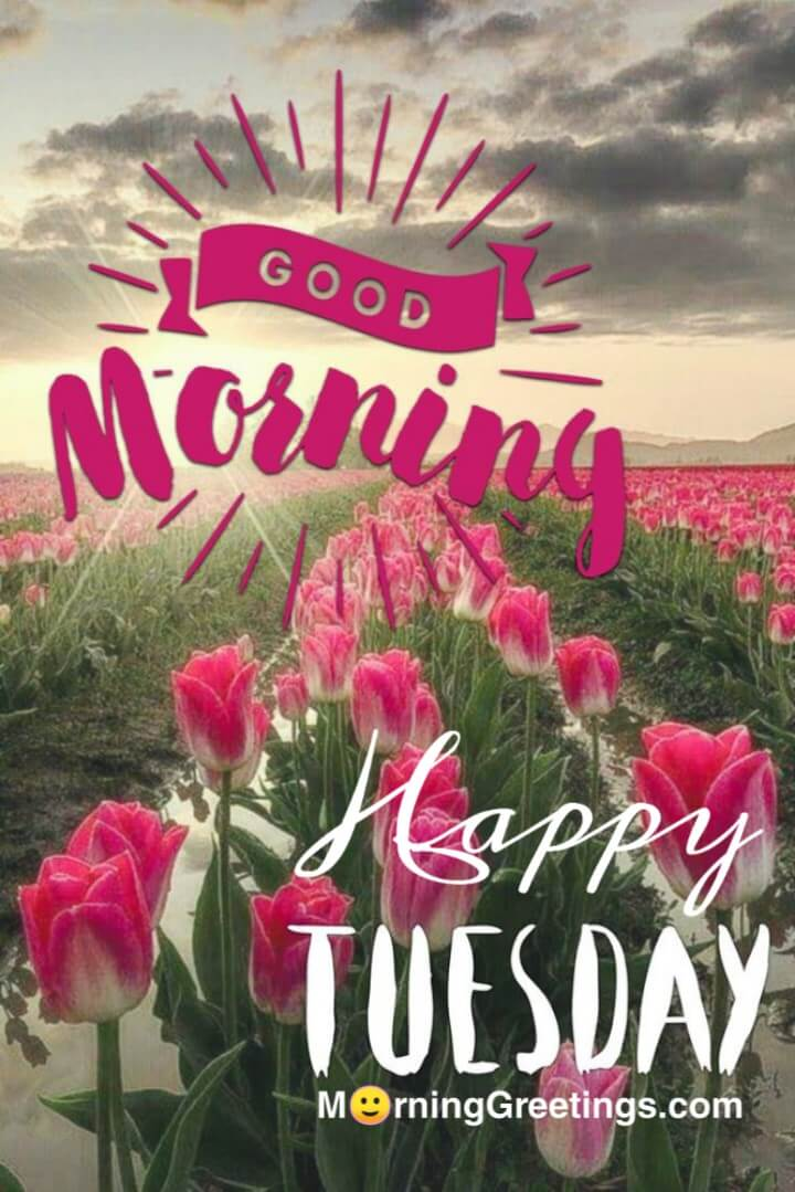 15 Most Tremendous Tuesday Wishes - Morning Greetings