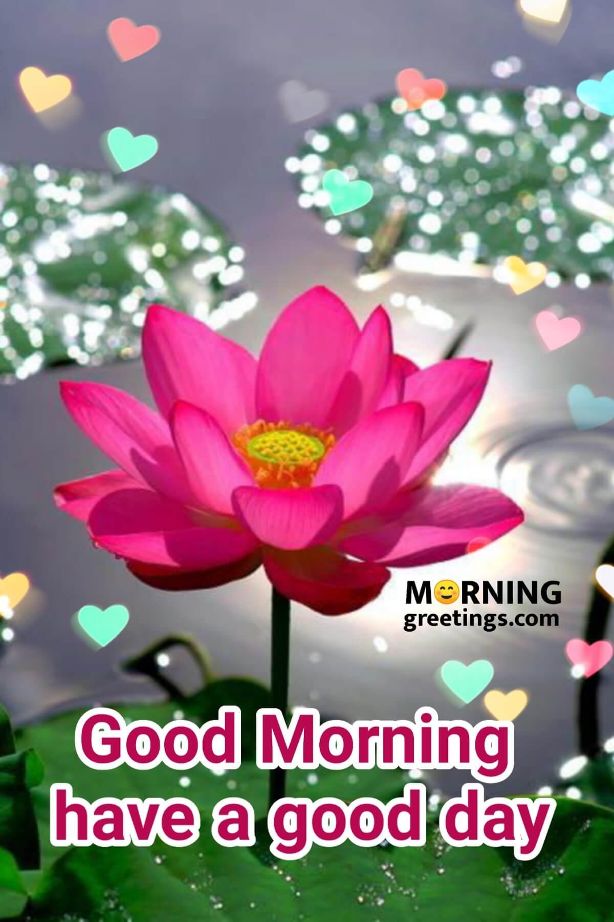 10 Most Beautiful Morning With Lotus - Morning Greetings – Morning