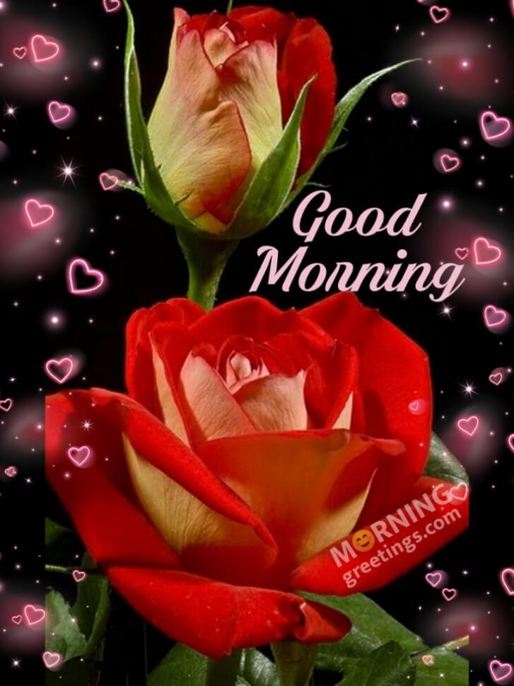 51 Good Morning Wishes With Rose Morning Greetings Morning Quotes And Wishes Images