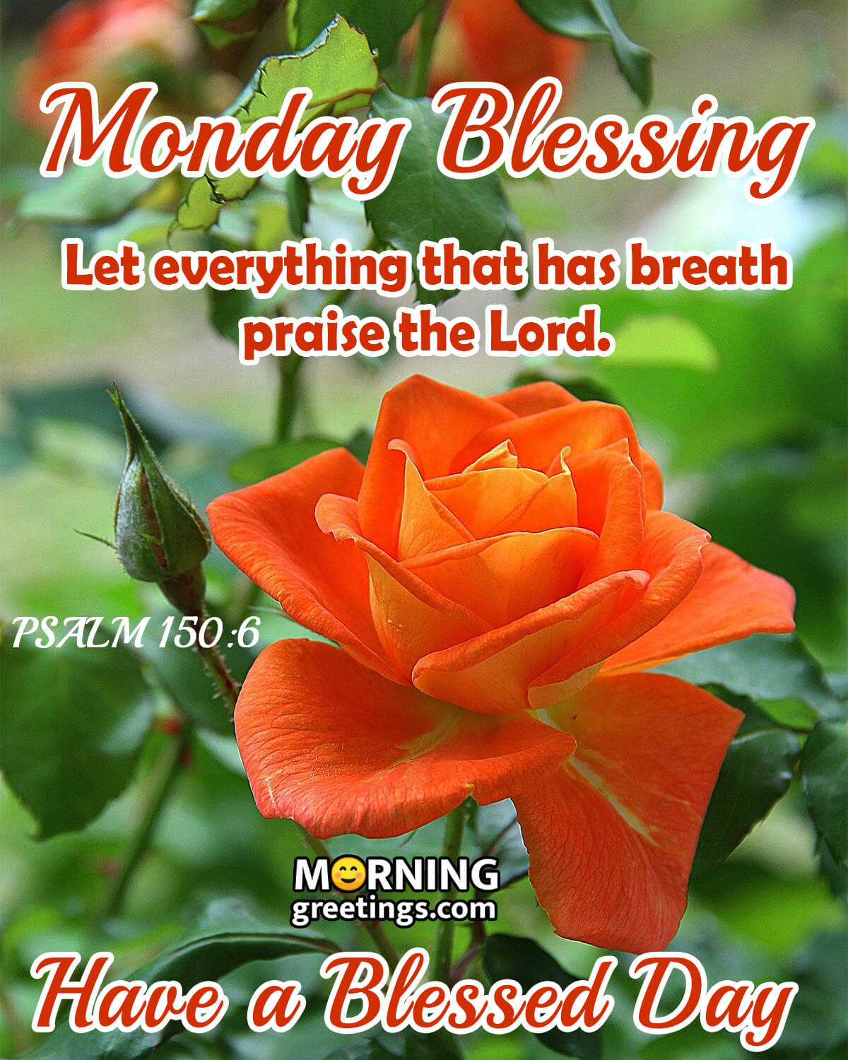 30 Amazing Monday Morning Blessings - Morning Greetings – Morning Quotes  And Wishes Images