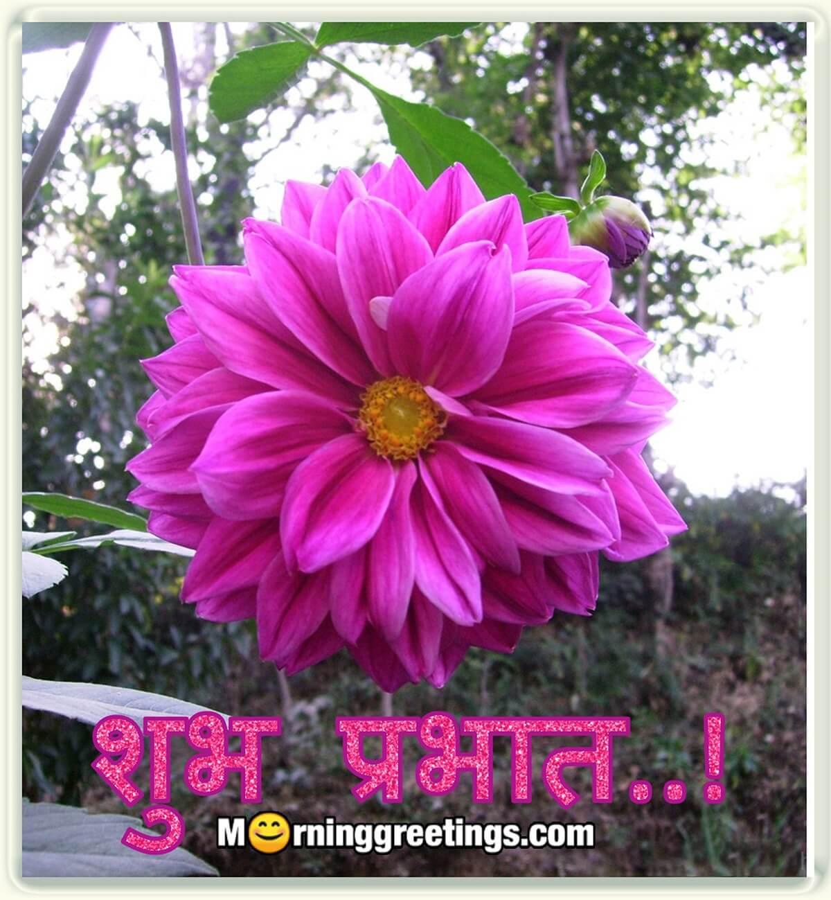 30 Good Morning Hindi Images - Morning Greetings – Morning ...